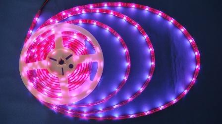 RGBストリップライト5m(リモコンセット)